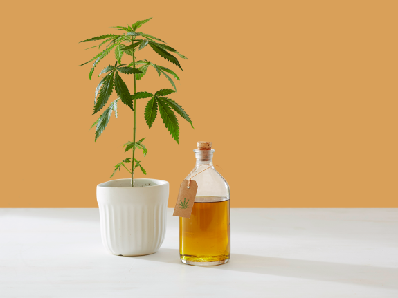 Cbd oil products growth